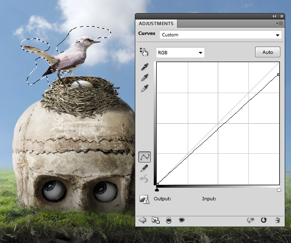 bird curves