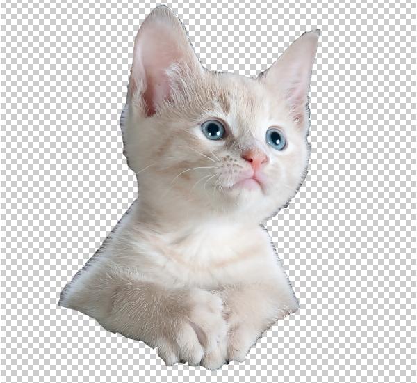 extrato de gato