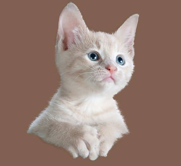 mascaramento de peles de gato