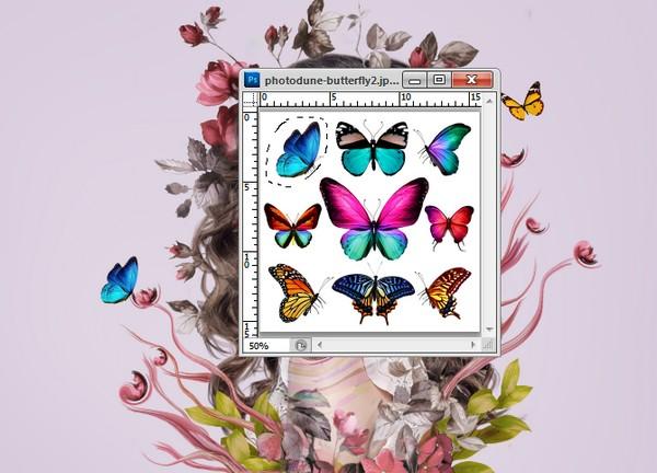 add butterfly 2