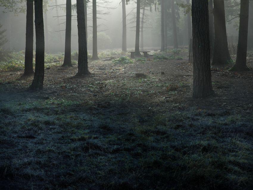 forest masking