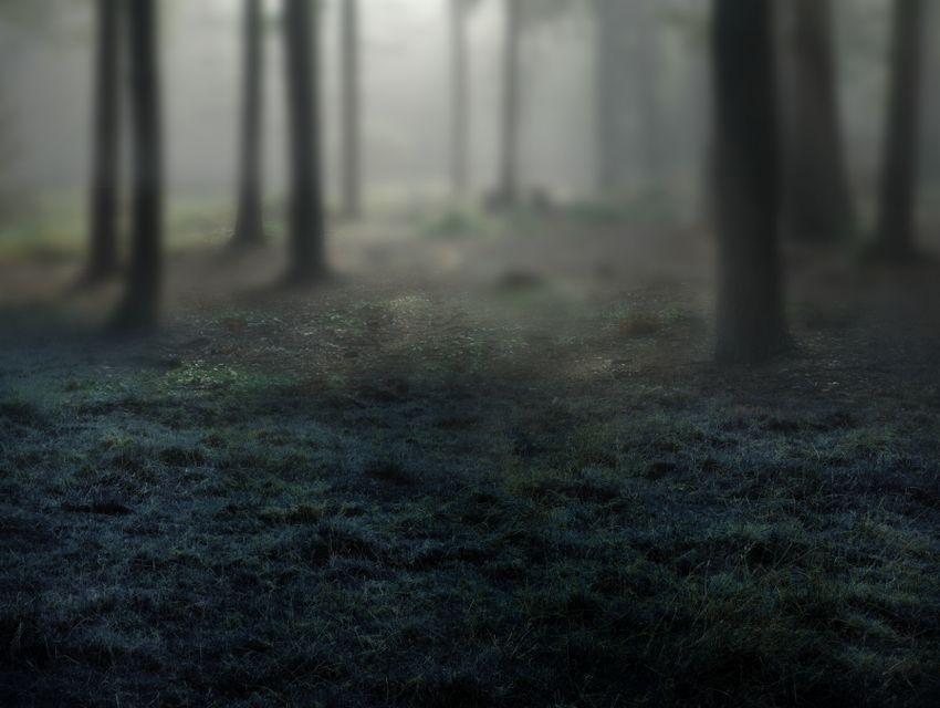 forest blur masking result
