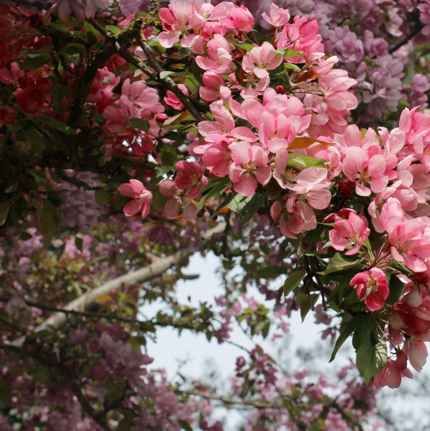 add flower background