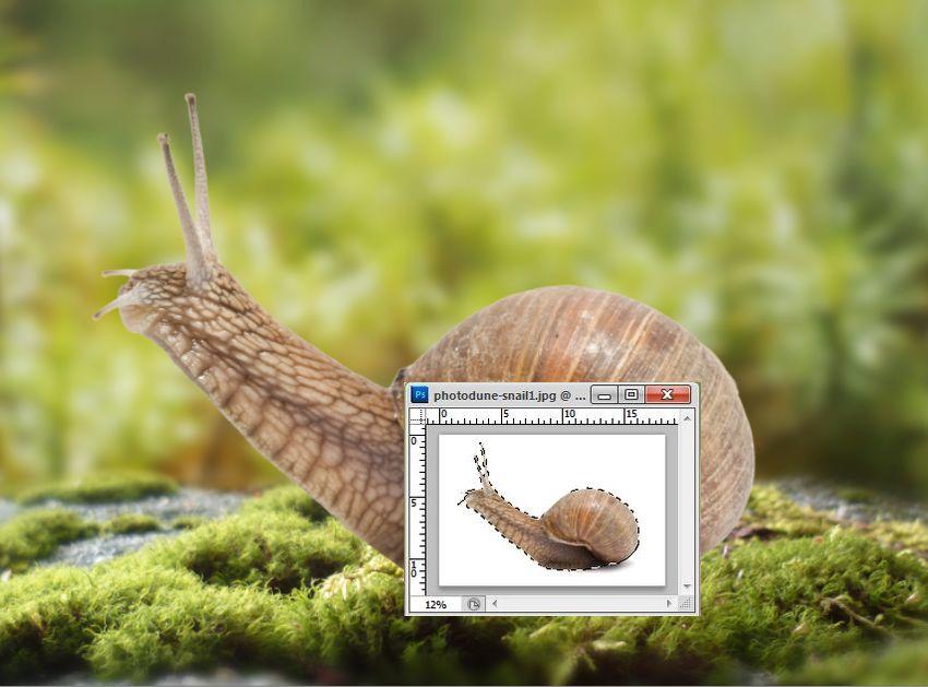 add snail