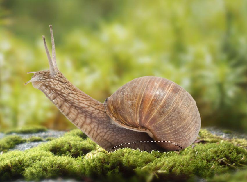 snail masking