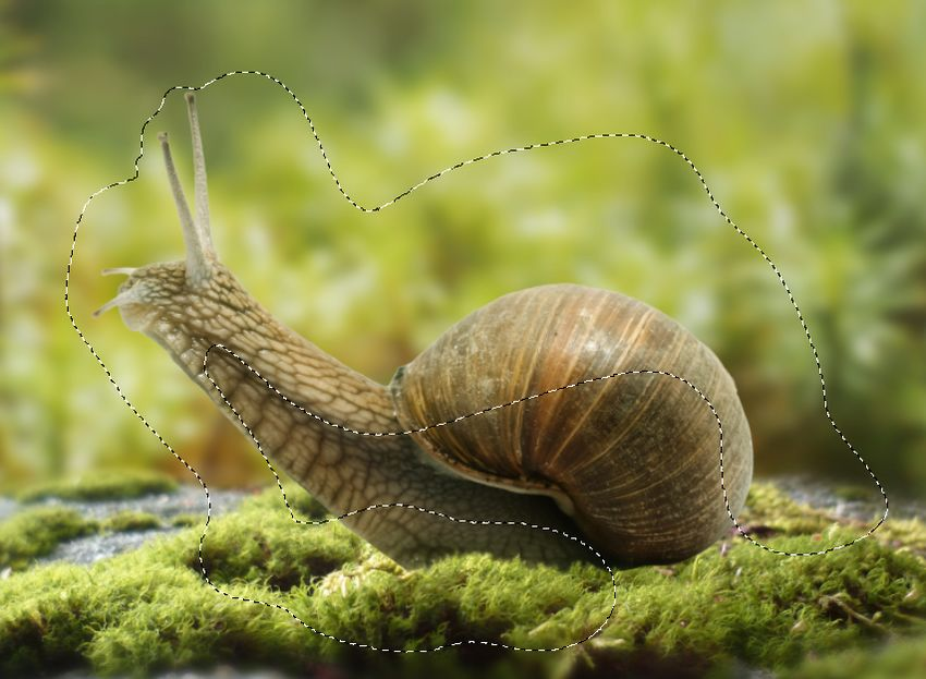 snail curves 1 masking