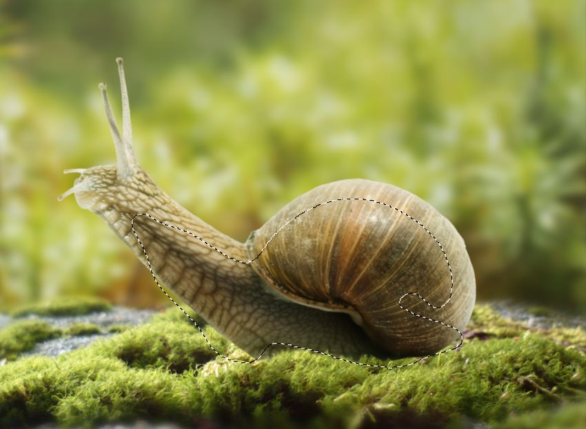 snail curves 2 masking