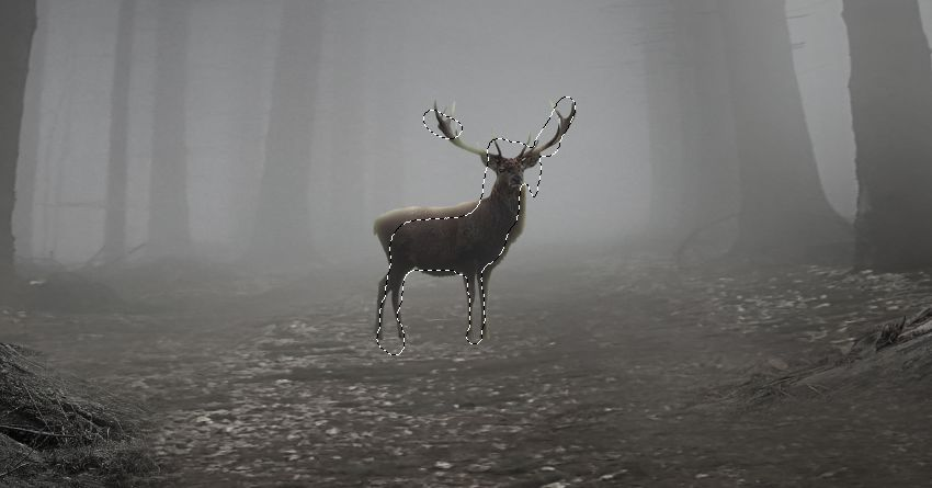 How to Create a Mysterious Forest Scene With Adobe Photoshop