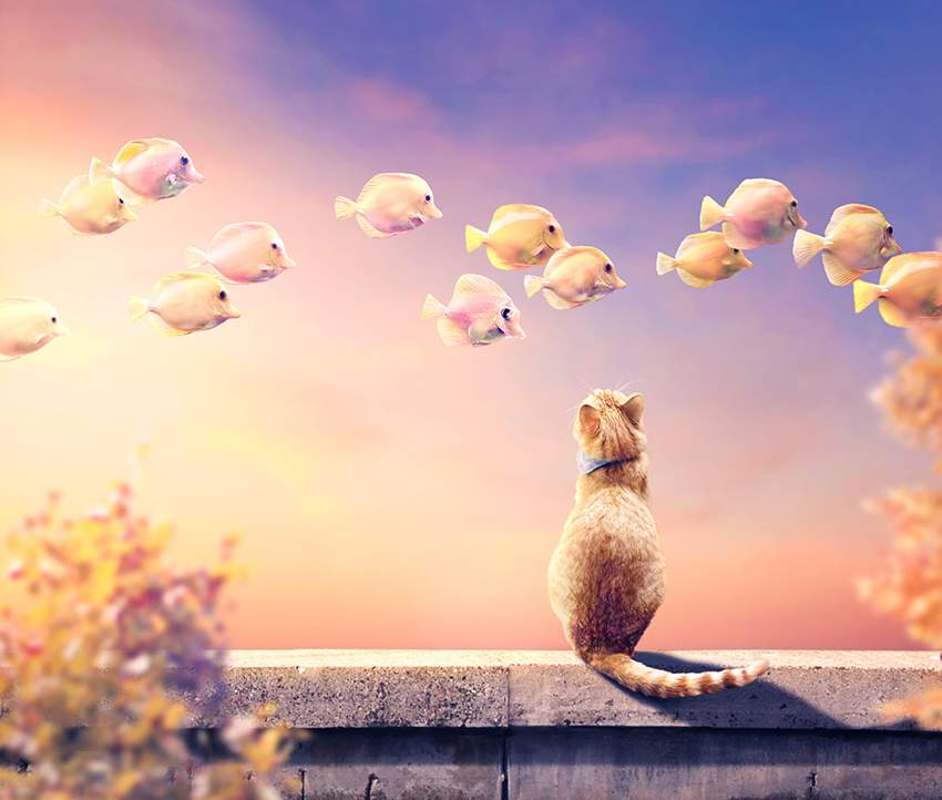 How to Create a Photo Manipulation of a Cat and Flying Fish With Adobe Photoshop
