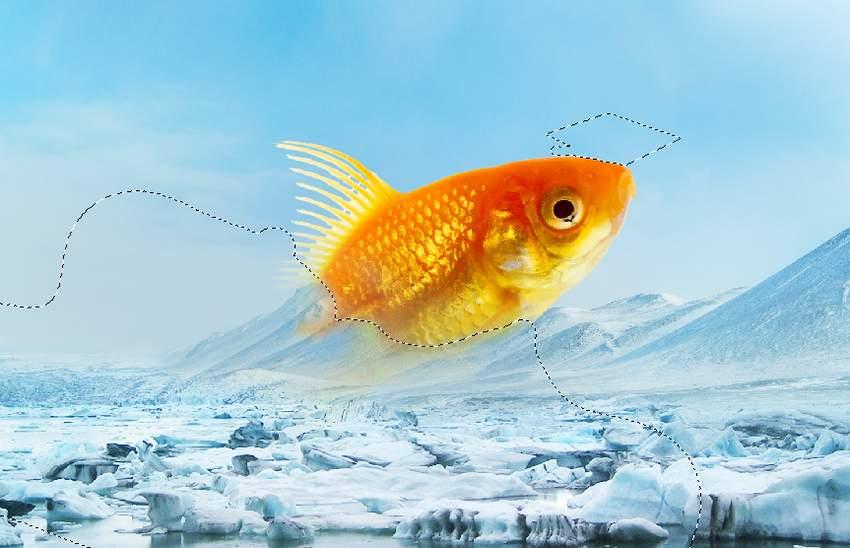 fish masking