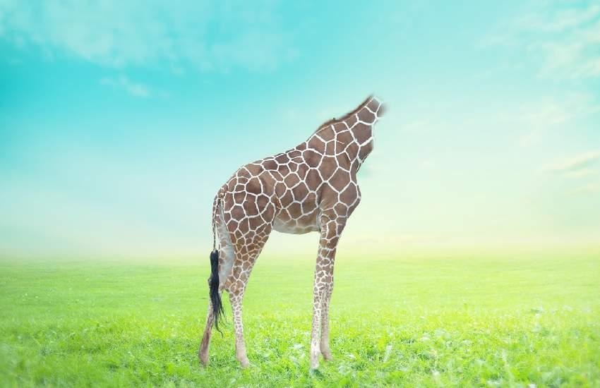 giraffe masking