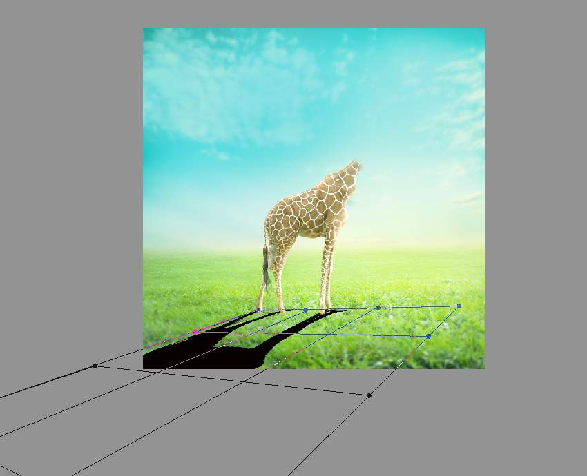 giraffe shadow transforming