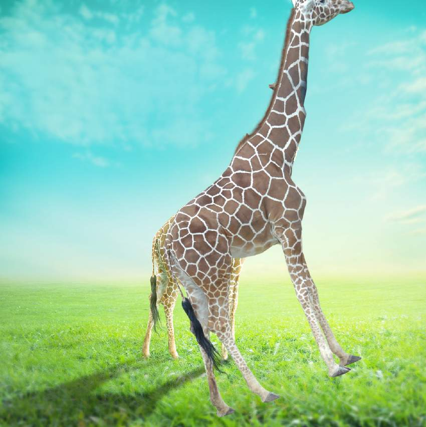 add giraffe texture to the neck of tree