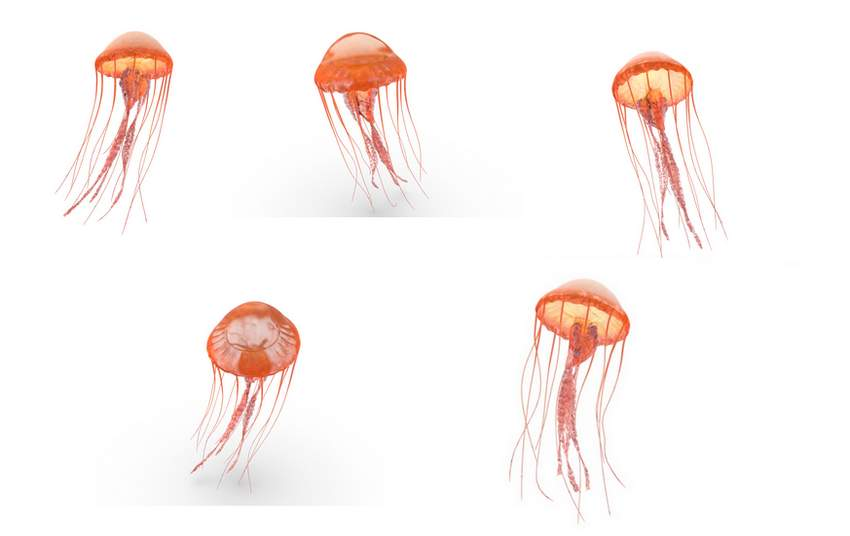 choose jellyfish