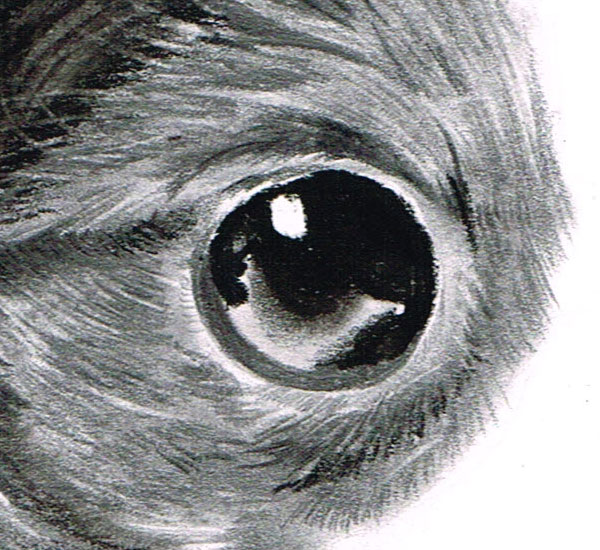 In the opposite eye notice how clever blending of the charcoal layer can give a great effect of depth in the eye