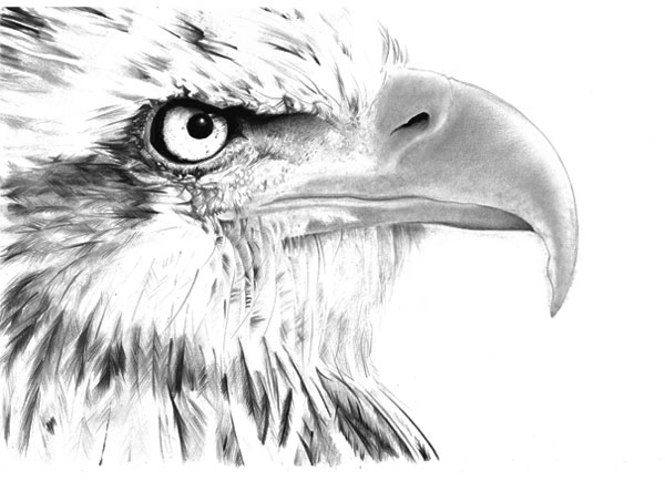 How your eagles beak should look once your layers are built up