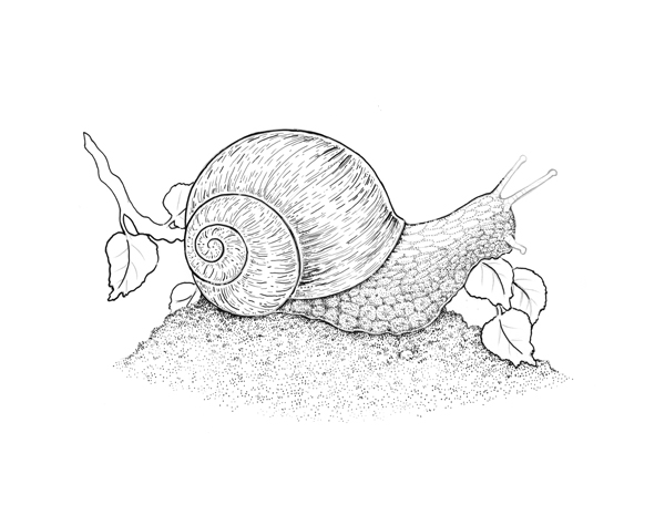 Expanding the texture of the snails body