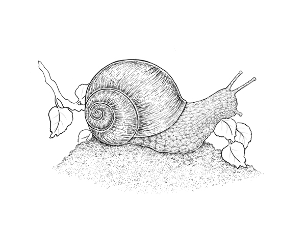 How to draw different kinds of texture with ink and nib for Simple snail drawing