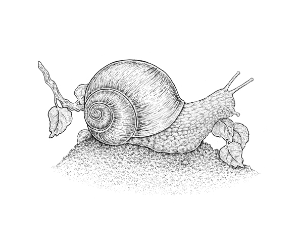 Cross-hatching on the shell
