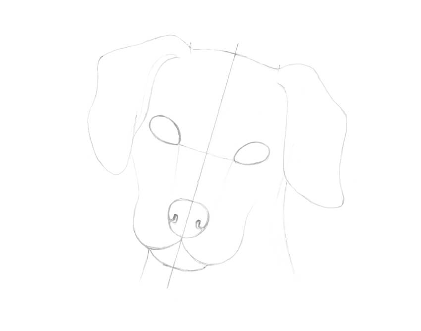 How to Draw a Dalmatian Dog
