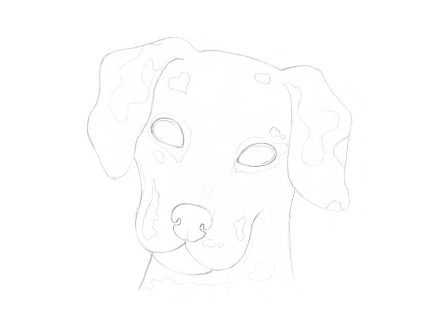 Transferring the main contours of the dog sketch