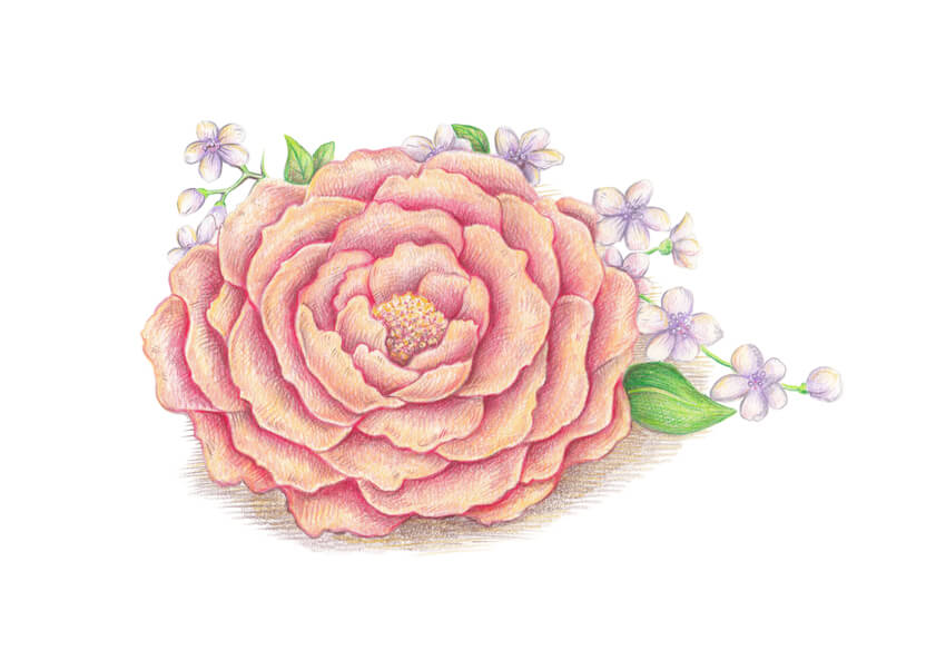 How to Draw Spring Flowers With Colored Pencils