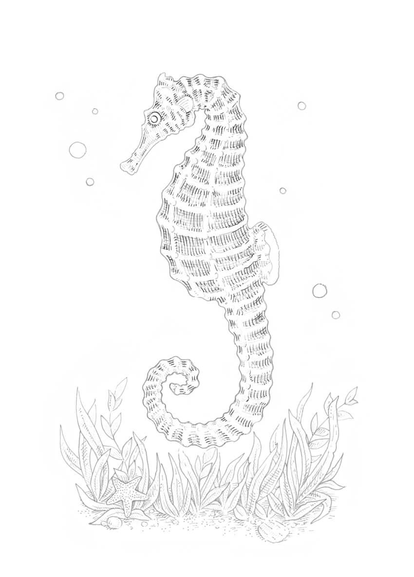 Bagaimana Menggambar Seekor Kuda Laut Dengan Ink Liner Hitam