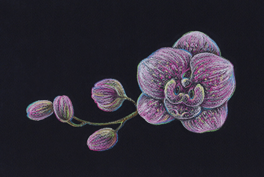 Accenting the pattern of the orchid with the light rosy color