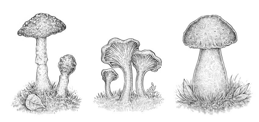 How to Draw a Mushroom Tutorial