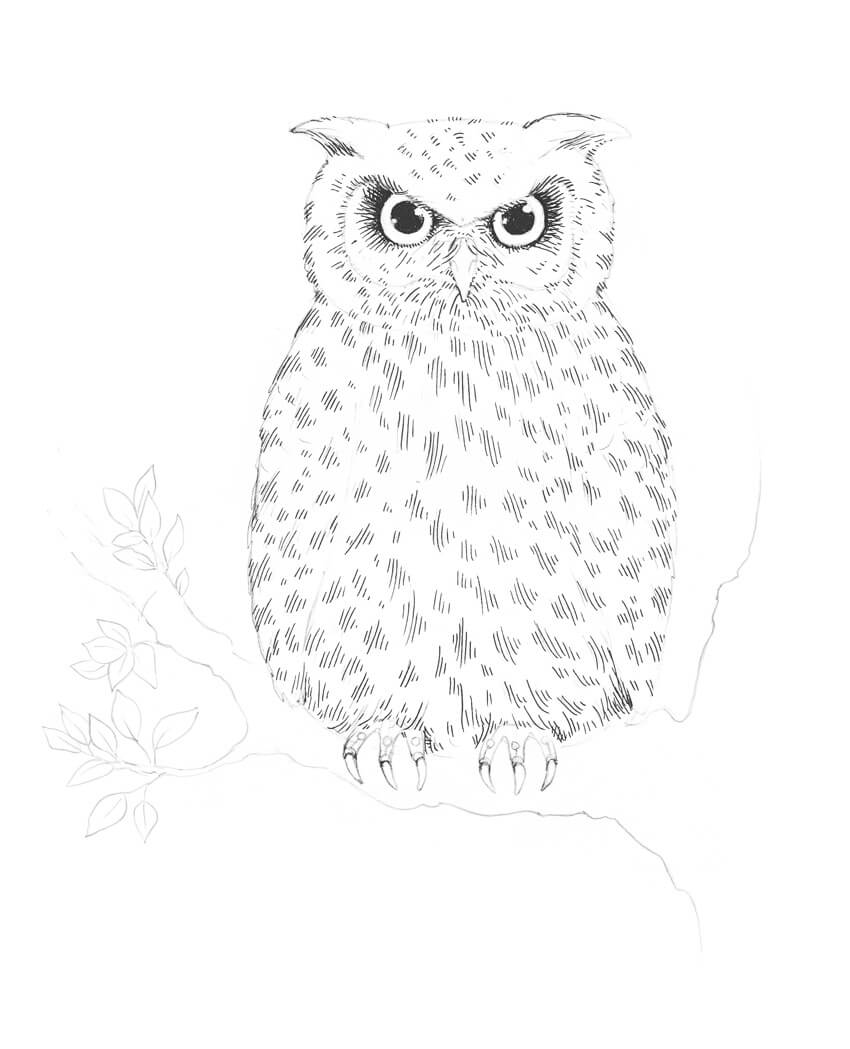 Uncategorized Easy Drawings Of Owls how to draw an owl drawing the eyes of owl