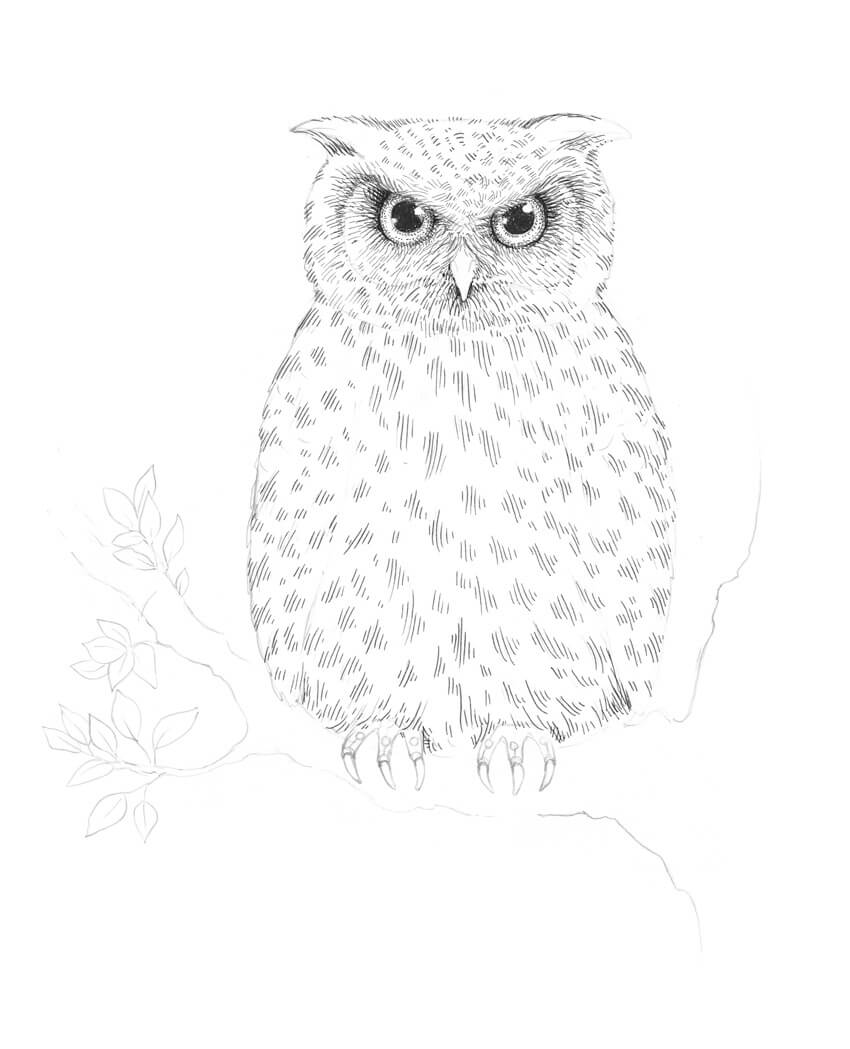 - How To Draw An Owl