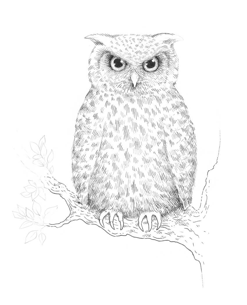 How to Draw an Owl