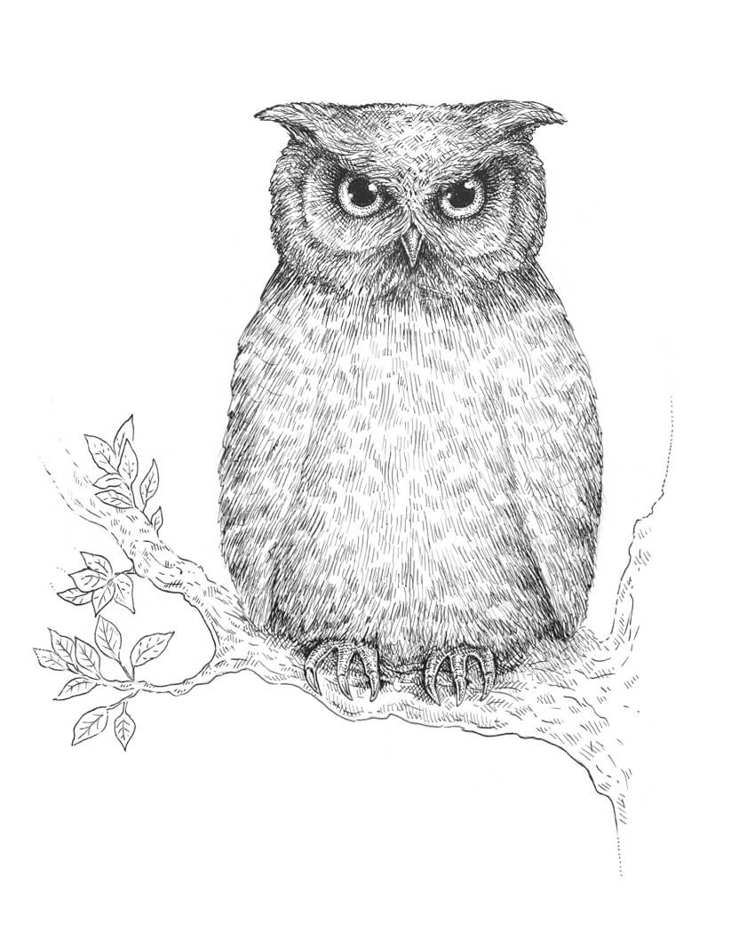 line drawings of owls images