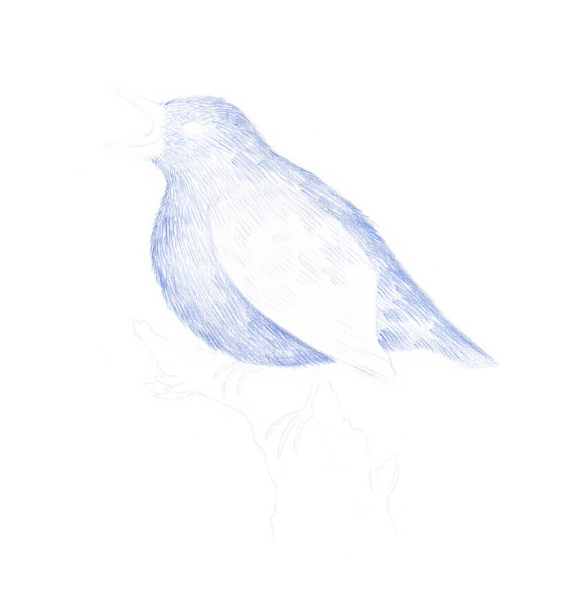Creating a base color of the birds body