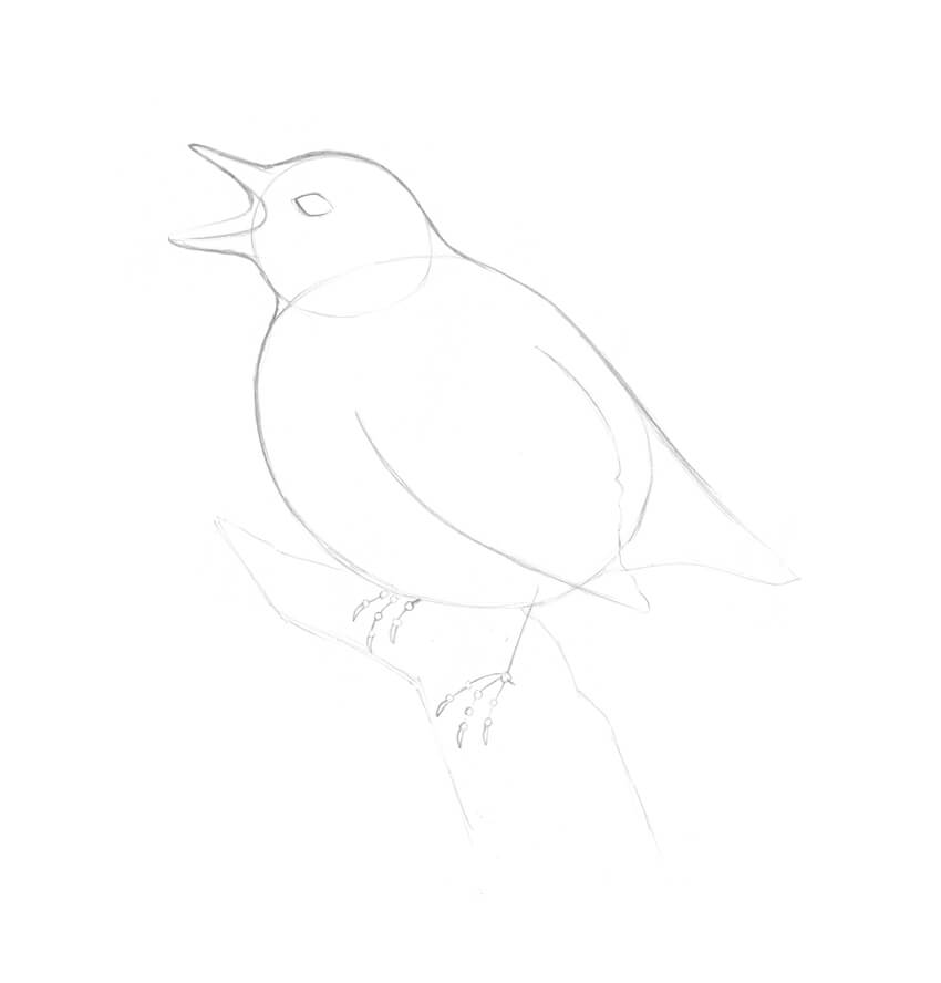 Refining the birds body