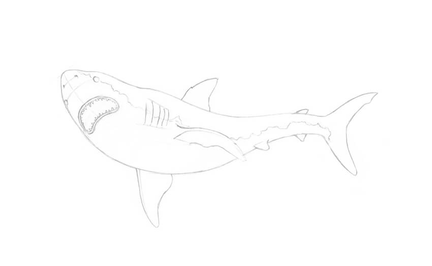 How to Draw a Shark Step by Step