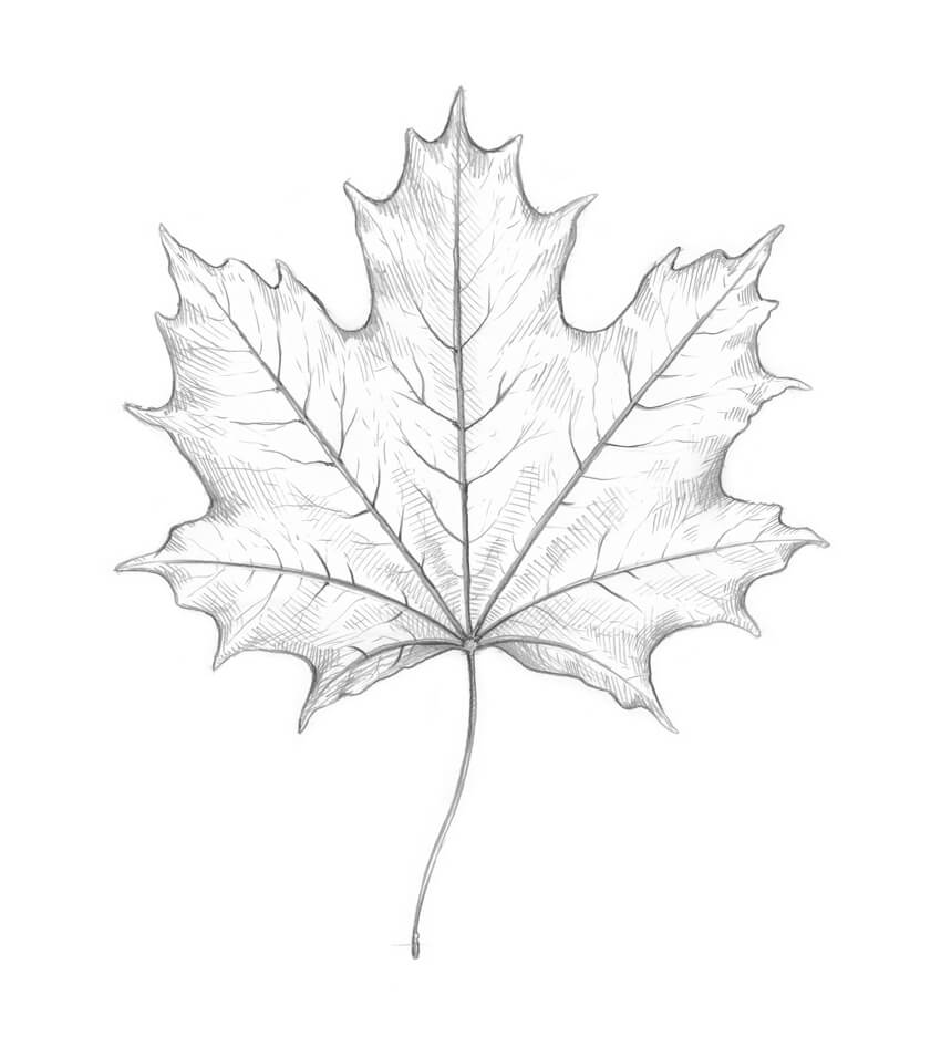 Shading the leaf
