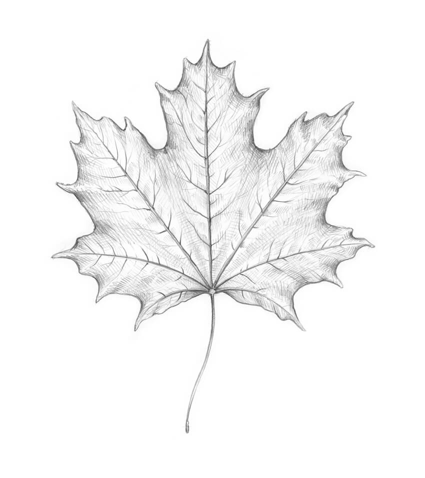 Darkening the leaf drawing