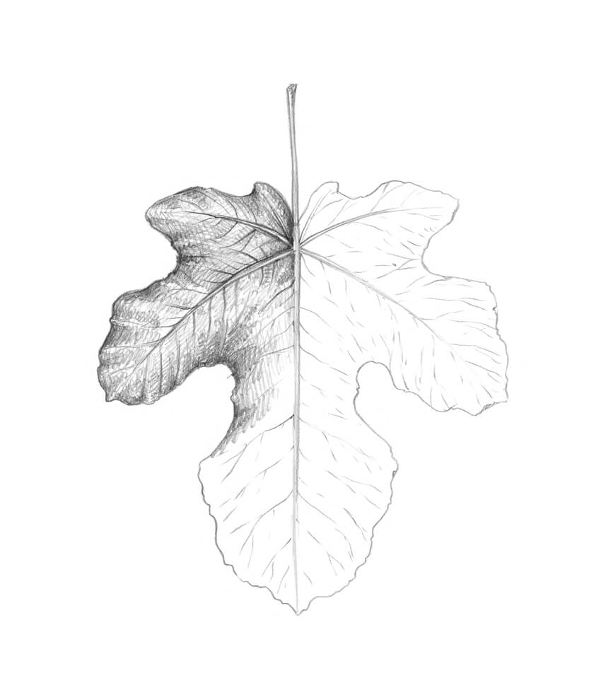 Shading the fig leaf