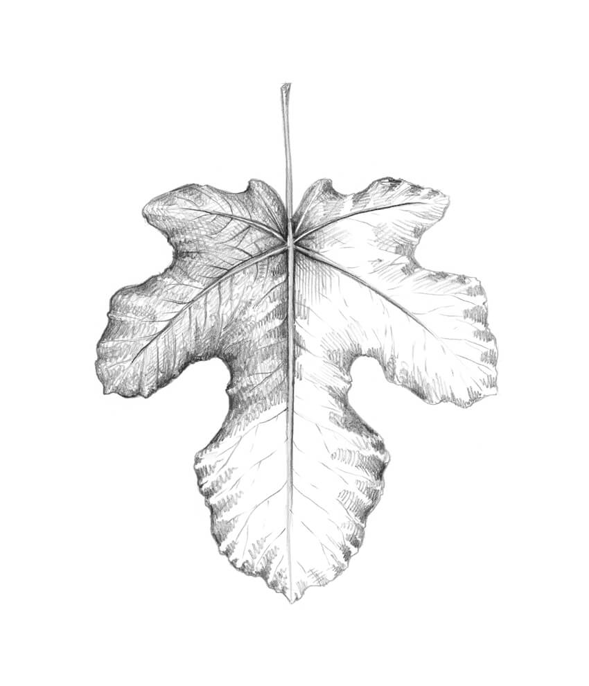 Working on the relief of the leaf