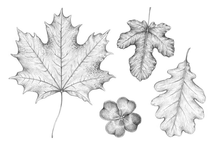 How To Draw A Leaf Step By