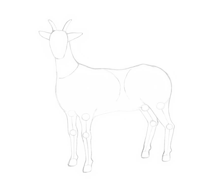 Drawing the hind legs of the goat