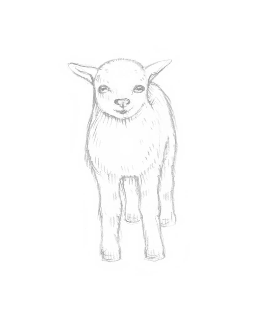 As A Cute Addition I Draw Floral Diadem On The Head Of Baby Goat There Is No Need To All Tiny Petals Or Other Details
