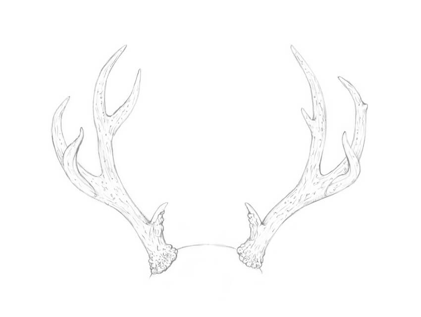 Sketching the texture of antlers