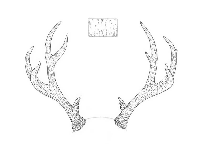 picture relating to Printable Deer Antlers identified as How toward Attract Antlers Stage by way of Phase