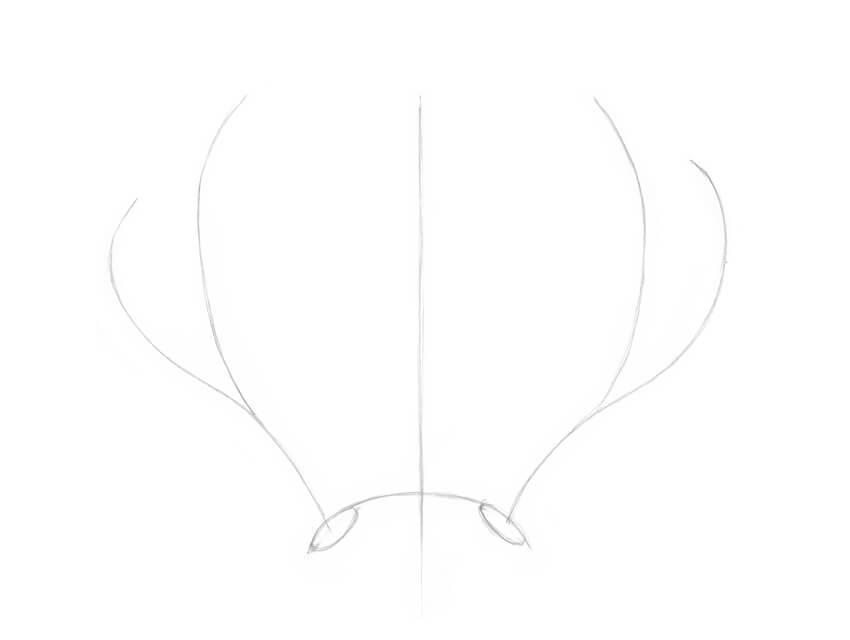 Drawing the framework of the antlers