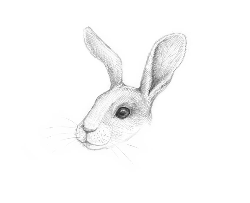 Line Drawing Of Rabbit Face : How to draw a rabbit step by
