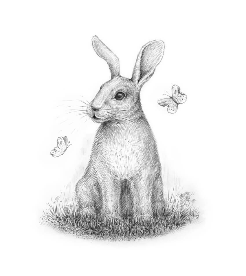 - How To Draw A Rabbit Step By Step