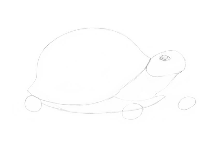 Drawing the eye of the turtle