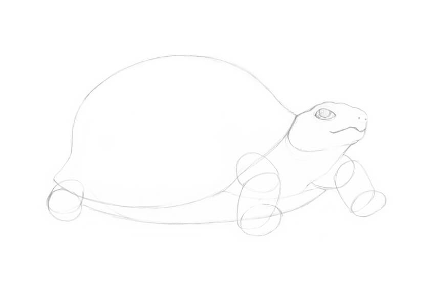 Outlining the limbs of the turtle